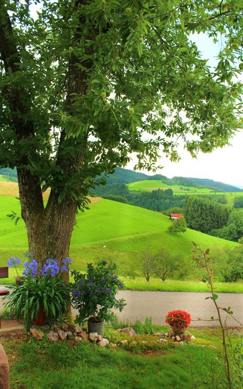 Fußbühl Aussicht Oberharmersbach