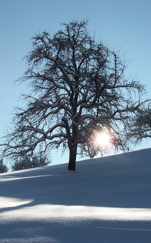 Winter auf dem Stinneshof