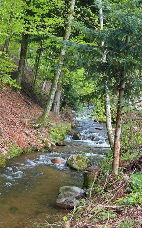 Zuwälder Bach Oberharmersbach