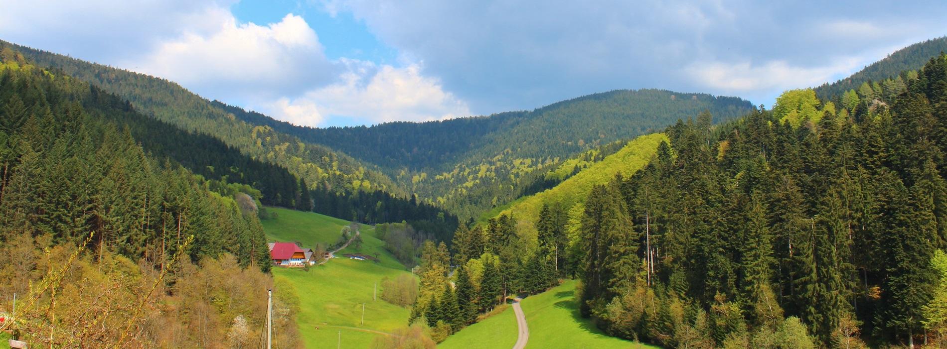 Zuwald Oberharmersbach Stinneshof