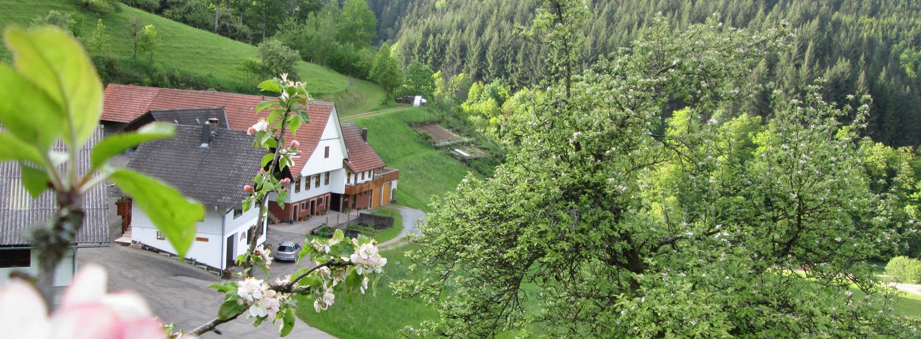 Zuwäldertal Ferienwohnung Stinneshof