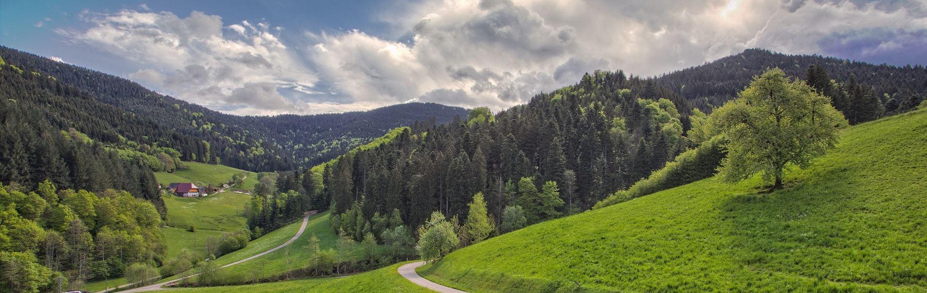 Stinneshof Aussicht Zuwälder Tal Oberharmersbach